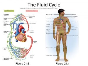 lymphatic fluid inversion