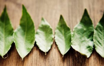 burning bay leaves benefits